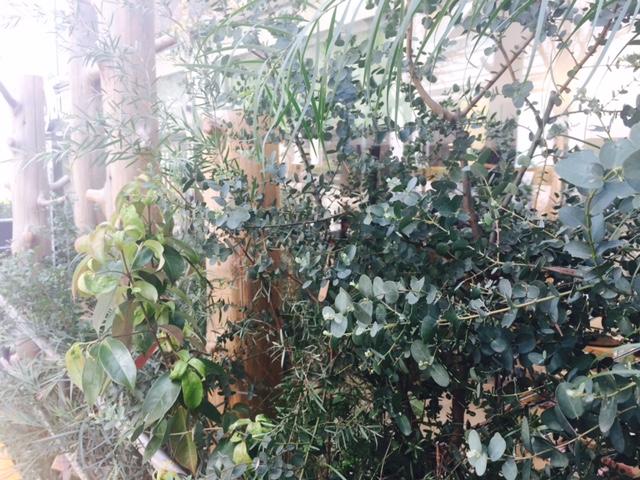 【アンバサダーブログVol.24】ハーブカーデンにも春が来ました